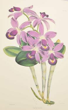 Robert Warner - Select Orchidaceous Plants - 1975