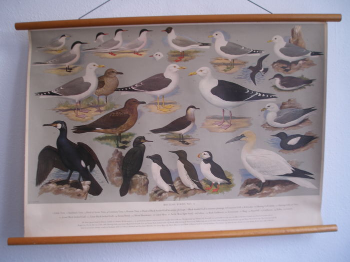 School poster / School map 25 waterbirds with the title British