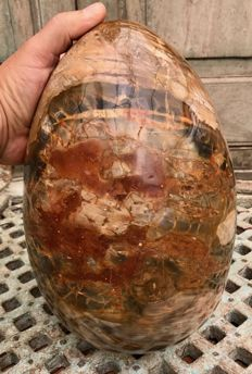 Petrified wood, with striking colour combination - large egg-sculpture - 28 x 18 cm - 13.13 kg