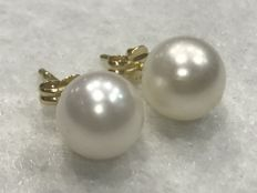 Gold (18 kt/750) Earrings with Saltwater Akoya Pearl