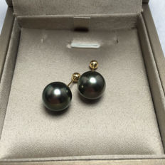 Tahiti Black Pearl 18K gold earrings, seawater. Pearl diameter: 11.7 mm. New no wear * no reserve price *