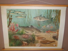 "Old nature school poster with fish on linen by Koekoek ""In the North Sea"""