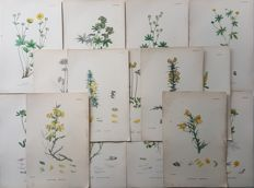 15 botanical prints by an unknown artist - Various plants - 19th century