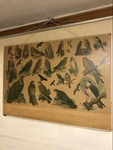 Old school poster owls and raptors and water birds