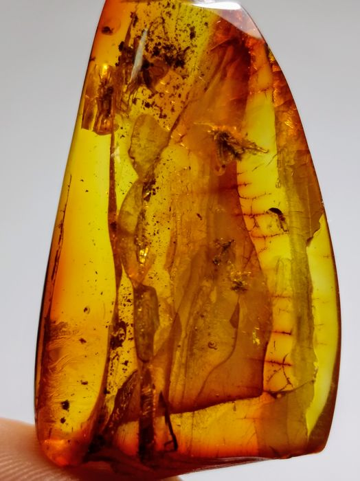 Natural Baltic amber with 9 inclusions and water drop - 4.5 × 2.5 × 1 cm