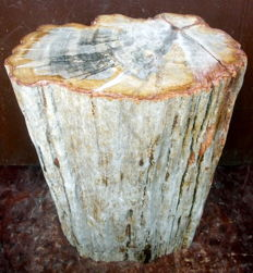 Trunk of Petrified Wood - 38 x 25 x 17 cm - 26.2 kg