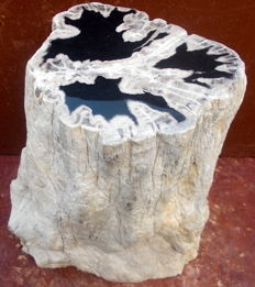Trunk of Petrified Wood - 32 x 20 x 19 cm - 22.6 kg