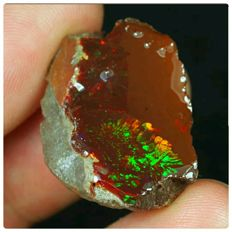 Natural Black Chocolate Opal Specimen - 24 x 18 x 10 mm - 25 ct