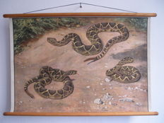 Beautiful school poster of an Snake, signed by Hans Schmidt from 1906