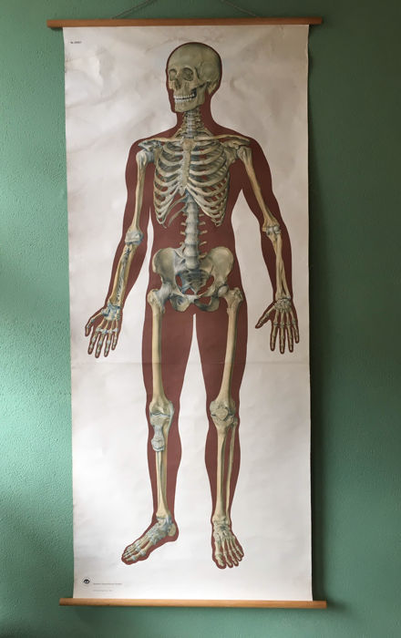 skeleton for 10 school setworks Interesting the skeleton facts: although bones appear very hard, under the surface they are more like sponges, with lots of air this makes bones very strong, but very light.