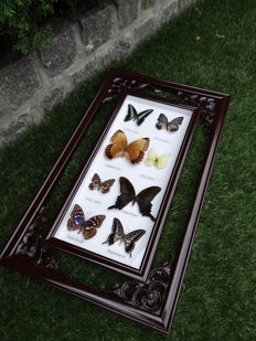 Fine quality Oriental-style Butterfly hanging frame - 58.5 x 35cm