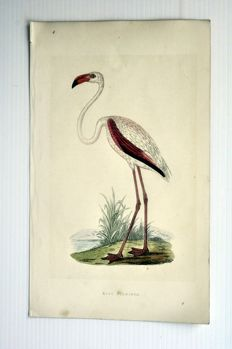 20 ornithological prints of A. F. Lydon (1836-1917) -  C.R. Bree 'History of the Birds of Europe not observed....' -  1863