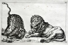 13 pages of the work by Robert Sayer (1725 – 1794) - The Complete Drawing-Book - Mostly facial sketches and animals - 1757
