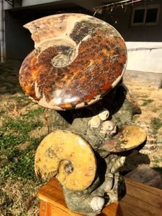 Large slabs with ammonite and other fossils - 415 x 200 x 275 mm - 14.216 kg