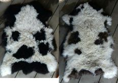 Extra large and luxurious Jacob Sheep Skins - Ovis aries - 102 x 75cm and 92 x 70cm  (2)