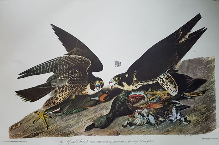 John James Audubon - 6 double elephant folio prints - [1971/1972]