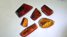 Baltic amber with insects and inclusions - 17 - 36 mm (6)