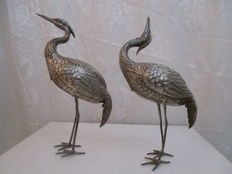 Silver pelicans, Spain, from the 1950s