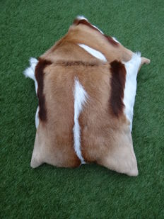 Set of Top quality Springbok hide cushions - Antidorcas marsupialis - 40 x 40cm (2)