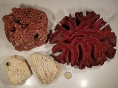 Small vintage collection of various Corals, including Brain, Organ Pipe and Branch - various species - 1.5kg  (4)