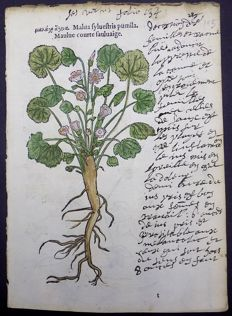 Leonhard Fuchs - Leaf with 2 botanical woodcuts on one leaf - Malva Sylvestris [High Mallow; Mauve des bois; Wilde Malve; Groot kaasjeskruid] - hand coloured - 1549