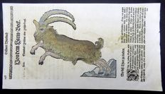 Conrad Gesner (1516-1565) - One leaf with 2 large woodcuts - Mountain Goat: Ibex - 1669