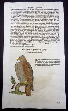 Conrad Gesner (1516-1565)  - One leaf with 2 large woodcuts Ornithology: Eagle [Adler, Aigle, Arend (roofvogel)] - 1669