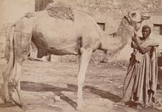 Maison Garrigues (active from 1870 to 1911) - Camel and camel driver, Tunisia