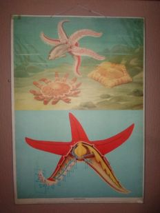 Beautiful old school poster with Starfish
