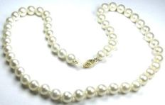 Akoya pearl necklace, clasp 14 kt  585 yellow gold, necklace length 45.0 cm.