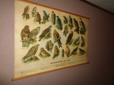 "Beautiful old school poster on linen ""Birds of prey and owls"" images of 19 different birds of prey and owls."