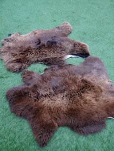 Fine pair of natural Chocolate-coloured Sheepskins - Ovis aries - 75 x 110cm  (2)