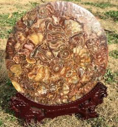 Natural large polished Half Cut Ammonite Shell Jurassic Fossil Disc Madagascar  285 x285  x70 mm - 1601 gm