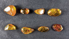 Fossil amber from the Dominican Republic with insects - set of 8 pieces (75.08 ct)