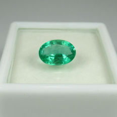 1.44 Ct - Emerald - No reserve price