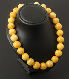 Baltic amber necklace,  yellow colour Amber, weight 99 gr with  925 silver clasp