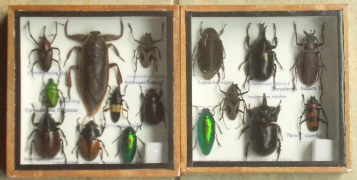 Entomology displays - various - 15 x 15cm  (2)