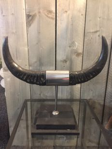 Taxidermy - Buffalo Horns on fine custom-stand - Bubalus bubalis - 54x50 cm