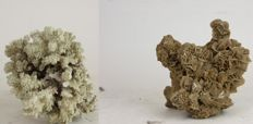 Interesting chunk of Branch Coral with Saharan Gypsum Desert Rose - Acropora sp. - 20 x 8cm  (2)