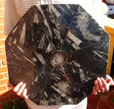 Huge polished fossil plate with ammonite and orthoceras - 46 x 46 cm - 10.320 kg