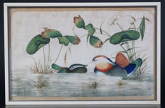 Canton painting with mandarin ducks - China - 19th century