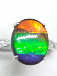 Large Top AA Grade Ammolite polished cabochon 67 million of years old