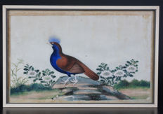 Canton painting with a tropical bird - China - 19th century