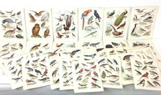 Very large collection of 28 antique lithographs with bird images