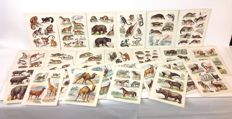 Collection of 25 antique lithographs with images of mammals of the world including various farm animals