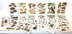 Collection of 21 antique lithographs with images of reptiles, snakes, turtles, fish, and invertebrates