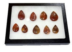 Silicified fossil wood - lot of 9 cabochons - 4.5 to 3 - 0.220 kg