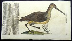 Conrad Gesner - One leaf with 2 large woodcuts Ornithology: Common Snipe & Lesser white fronted Goose - 1669