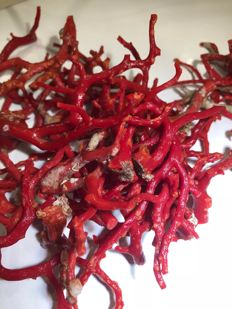 Red Coral fragments - Corallium rubrum - 7 to 8mm - 200gm