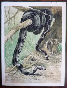Old school poster with the animals: Boa Constrictor (giant snake), Rattlesnake and Cobra